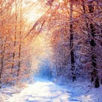 amem_winter-woods.jpg