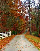 autumn-backroad