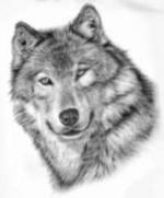 hylton-wolf-picture