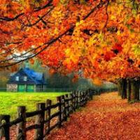 amem-autumn1