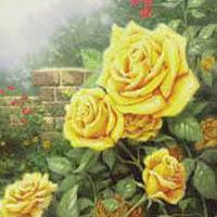 kink-yellow-rose