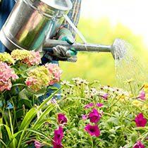 amem_gardening.jpg