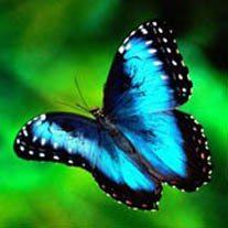 amem_butterfly.jpg