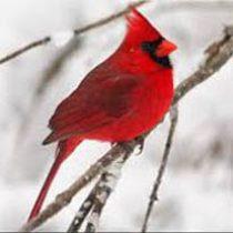 amem_cardinal1.jpg
