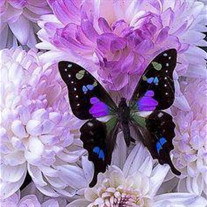 amem_butterfly-purple.jpg