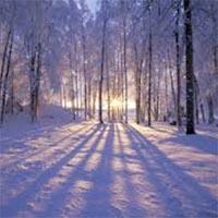 amem_snowy_woods.jpg