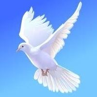 amem_white-dove.jpg