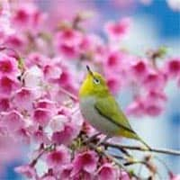 amem_songbird.jpg