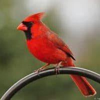 amem_cardinal.jpg